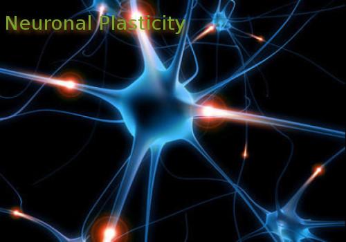 neuronal-plasticity