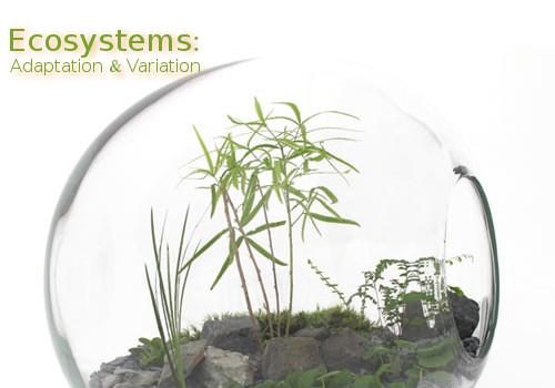 terrarium eco system